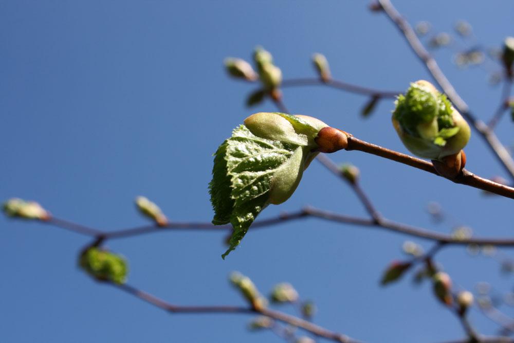 Юная весна