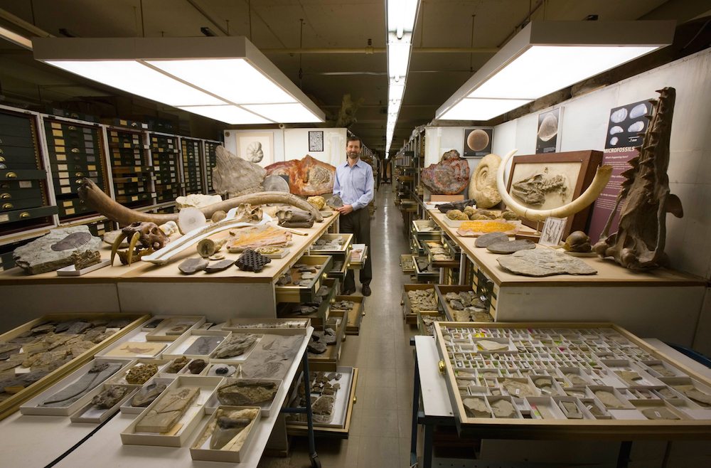 A view of one part of the Paleontology collection in the Smithsonian Institution's National Museum o