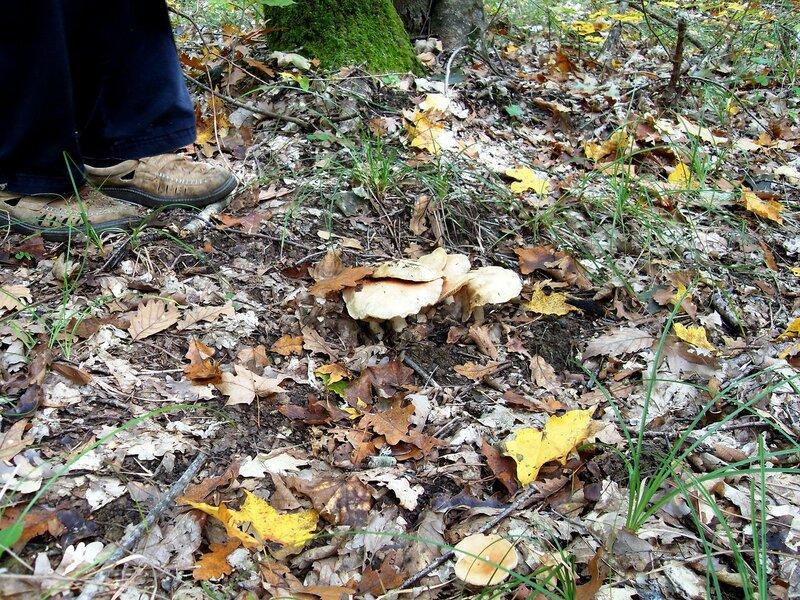 Средь листьев жёлтых ... и грибы ... SDC15401.JPG