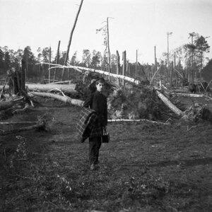 1904. Мотя среди поваленного ураганом леса в Сокольниках