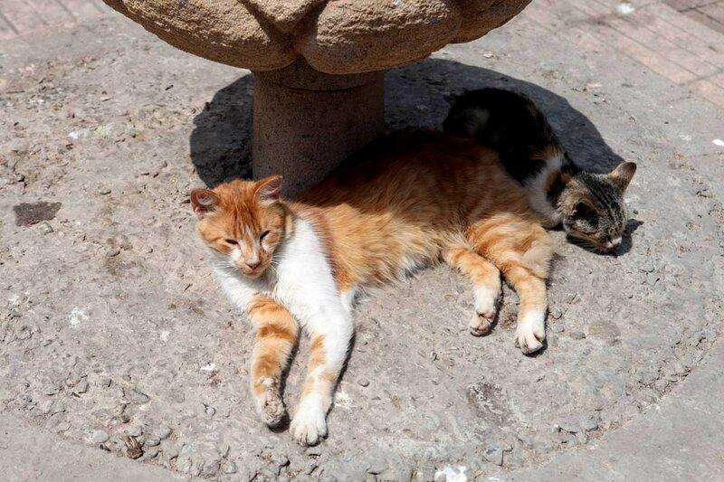 Эссуэйра - коты