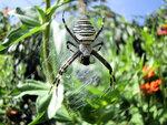 Голубой паук-5.jpg