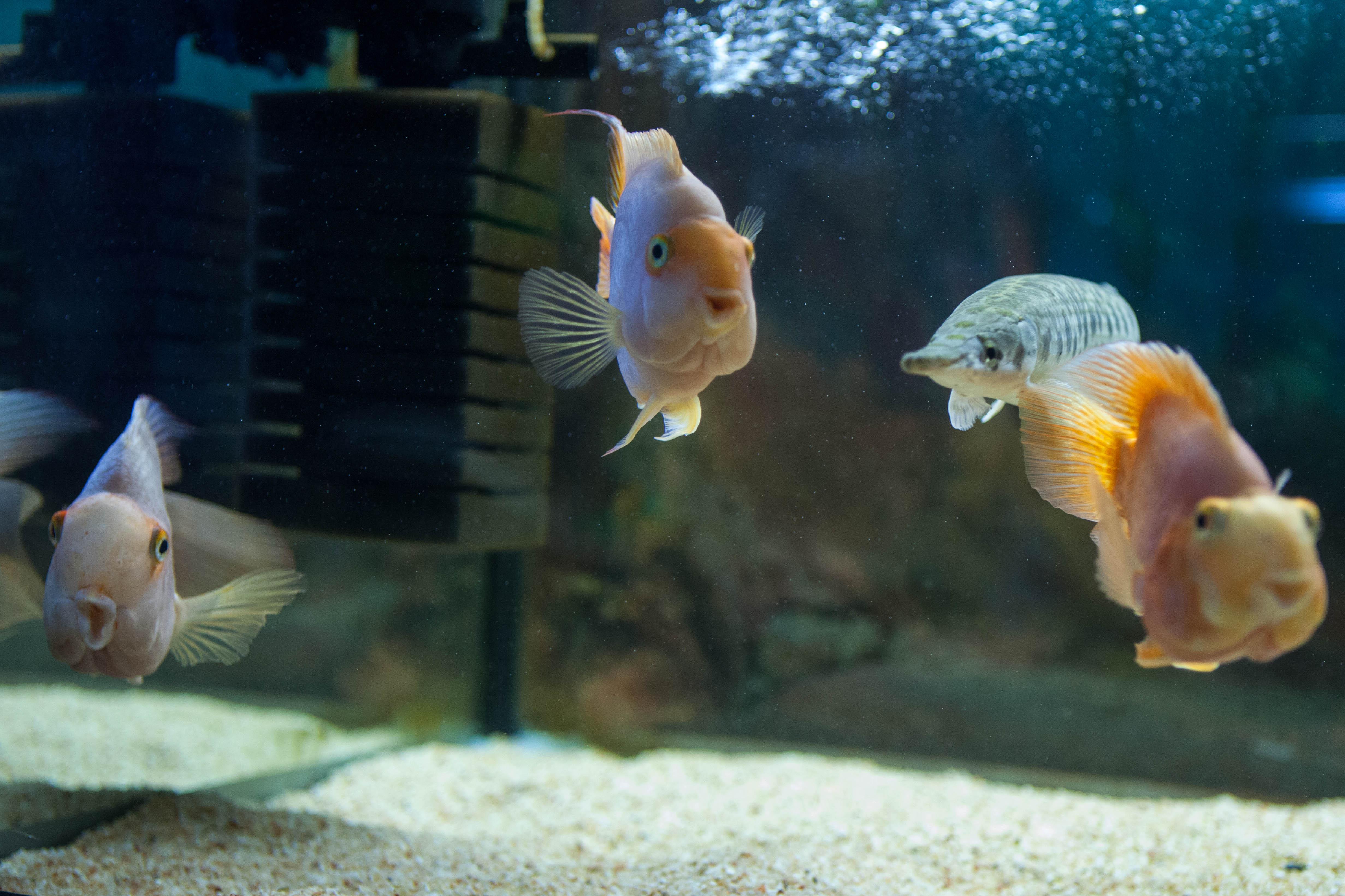 Музей аквариумистики на Арбате. Выставка Живые акулы.