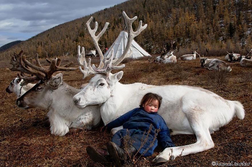 Беспрецедентные фотографии кочевников-оленеводов. Фотограф Хамид Сардар-Афхами (Hamid Sardar-Afkhami) (10 фото)