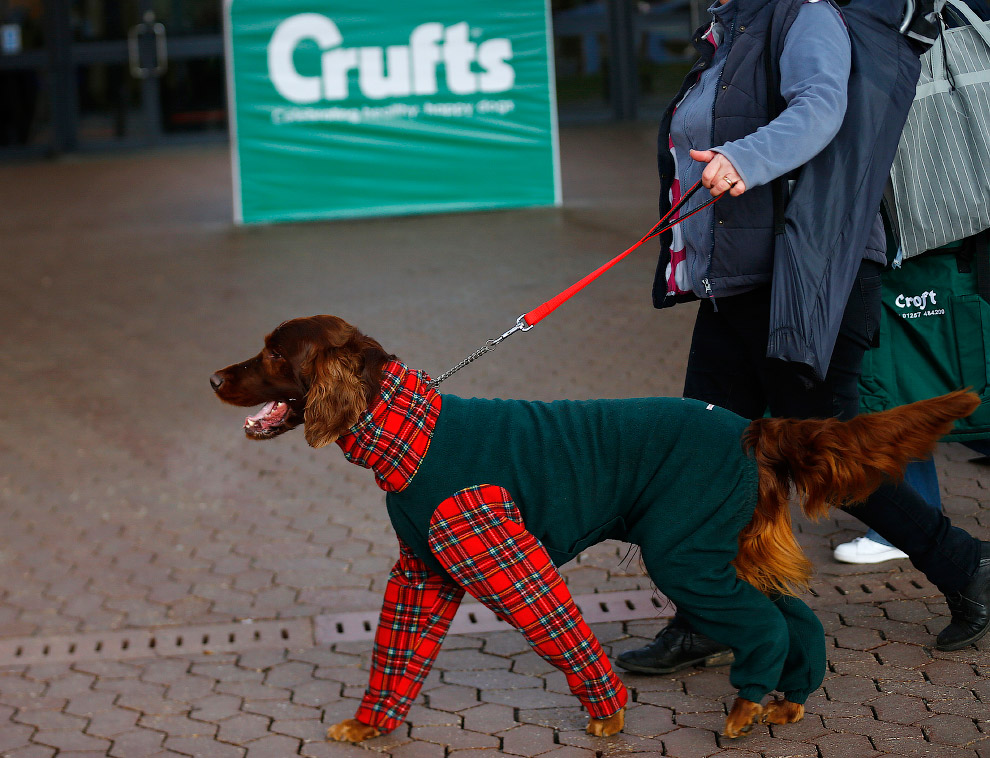 Vystavka-sobak-crufts-dog-show-2015-22-foto