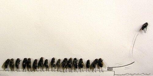 средство от мух. что будет, если утопить муху. как избавиться от мух