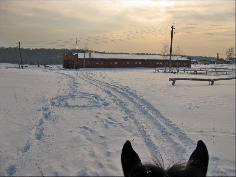 У конюшни