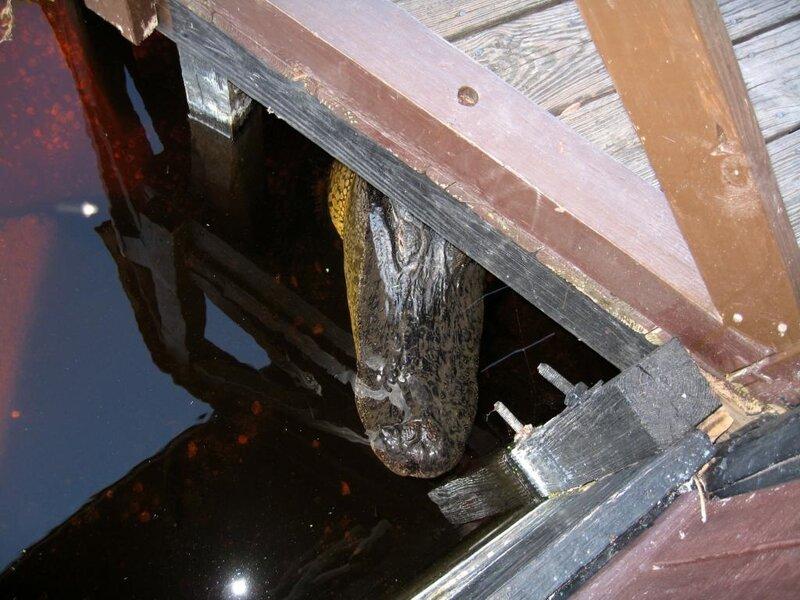 Крокодил под мостом