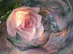 роза в ракушке