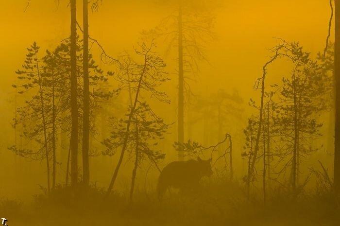Жизнь медвежьей семьи