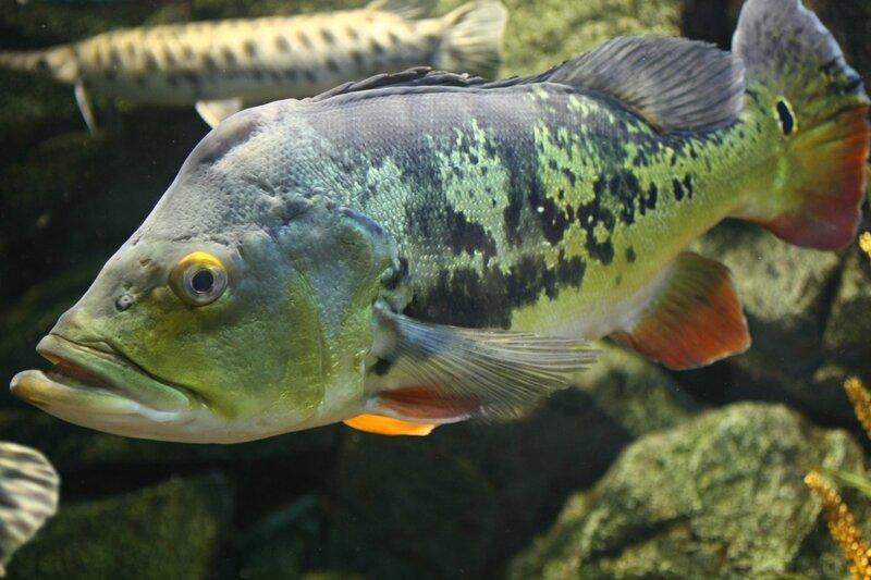 Рыбки здоровенькие, а цена ооочень умеренная!