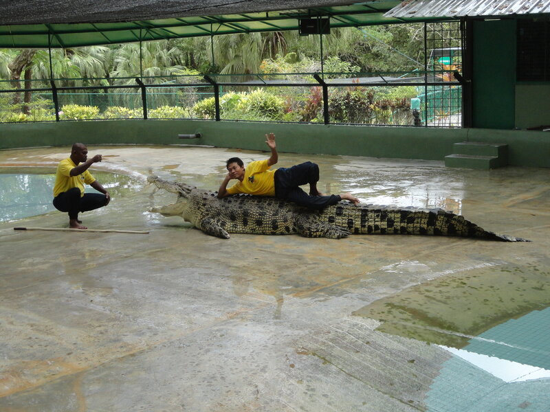Крокодилы-уроды