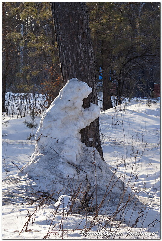 Снежные медведи