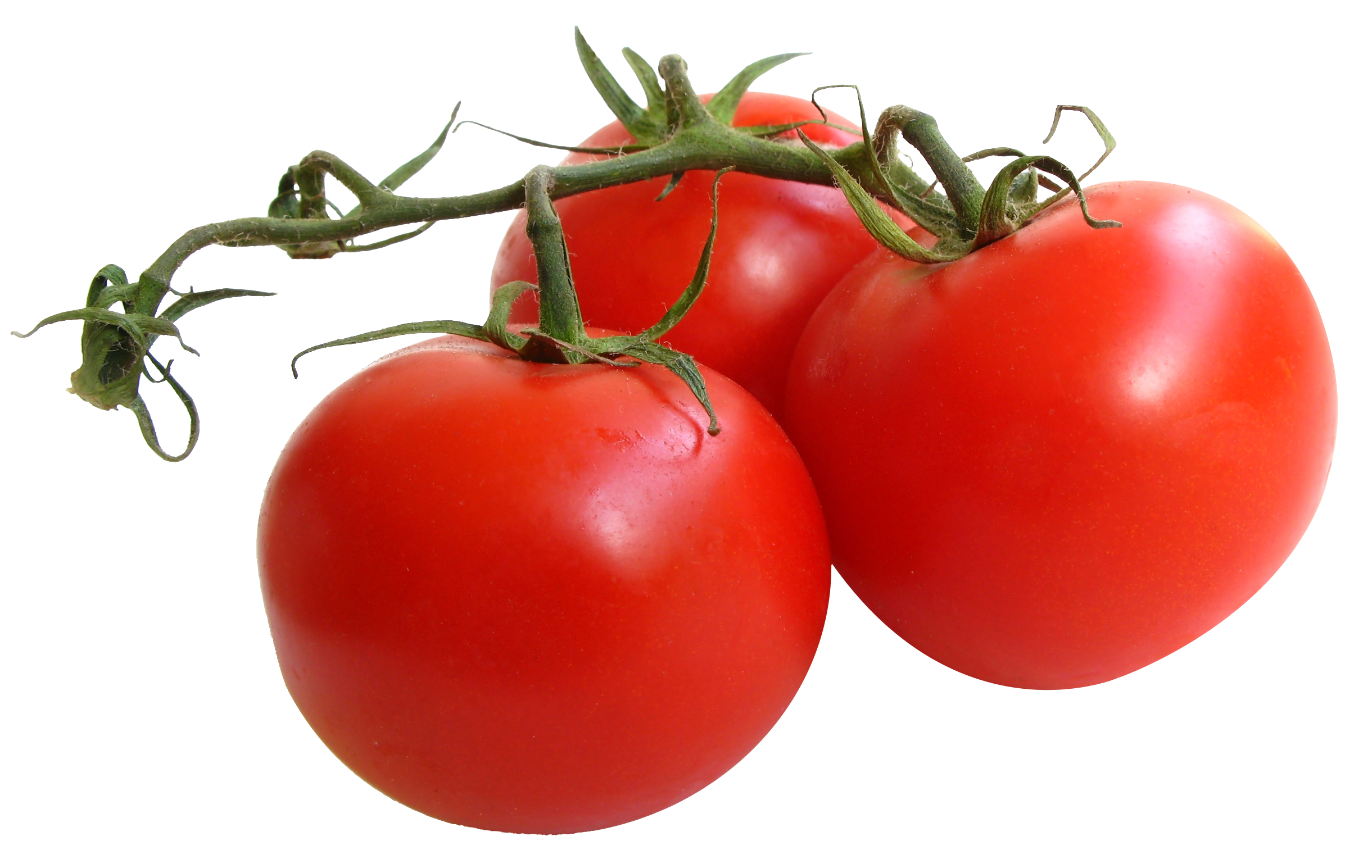 картинки овощей на прозрачном фоне