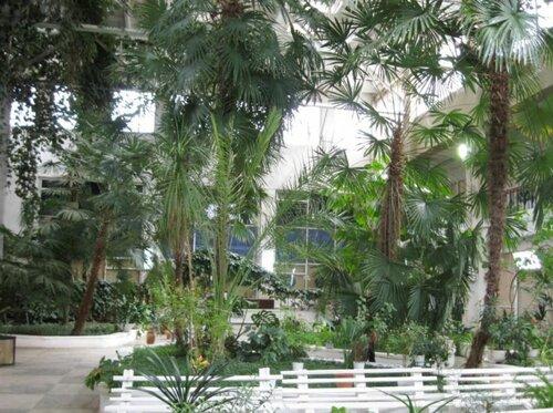 Пальмы в ботаническом саду (02.04.2013)