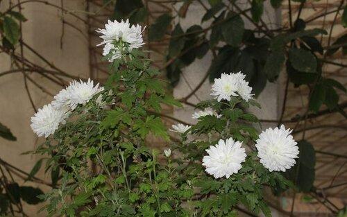Цветы в ботаническом саду (02.04.2013)