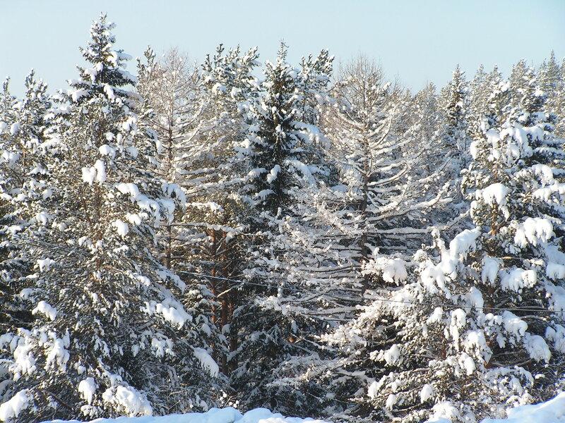 Проблем со снегом тут нет :) (02.04.2013)