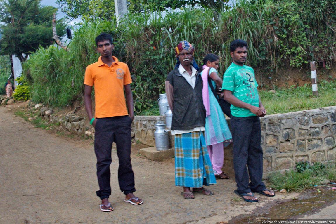 Шри-Ланка_Чайный замок_37