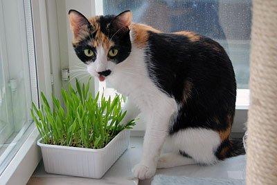 Как узнать сколько кошке лет фото