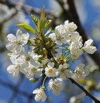 Скоро Весна!
