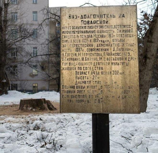 Срубили вяз на Поварской