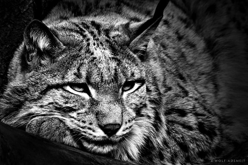 Фотограф Wolf Ademeit