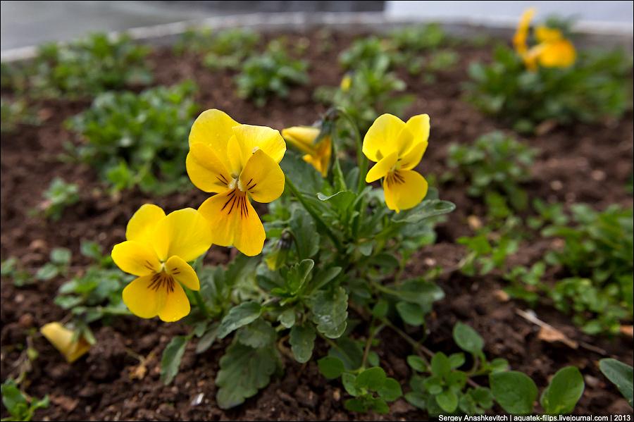Февральские цветы в Севастополе