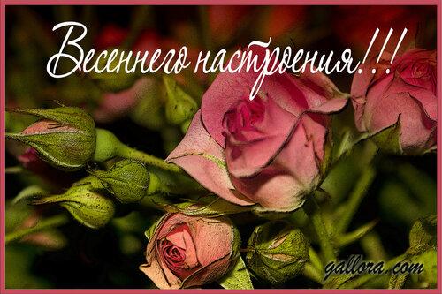 Поздравления и спасибо за приглашение