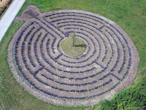 лавандовый лабиринт в Германии