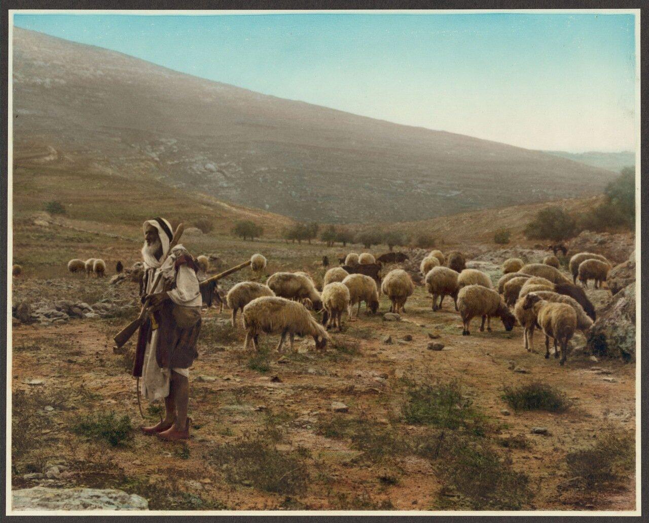 Пастух со стадом овец