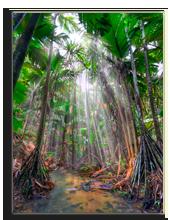 Сейшелы. Нацональный парк на Праслине. Jungle. Фото Alexey Stiop  - Depositphotos