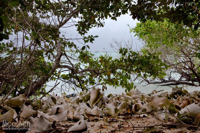 гигантские ракушки на острове Crasqui