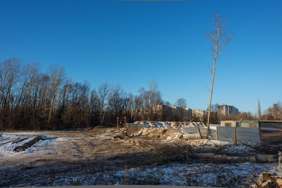 вырубка деревьев в Сарове