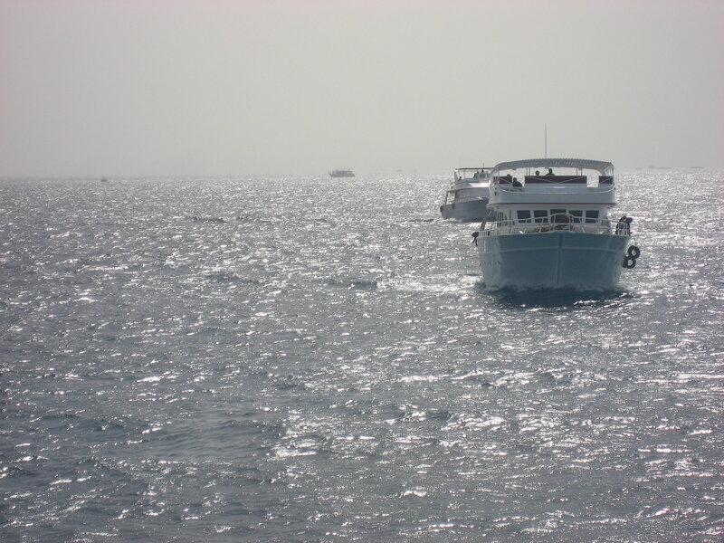 Дайвинг в Египте на Красном море - фото и наши отзывы - Экскурсии, Техника, Море, Животные - hurgada, egypt