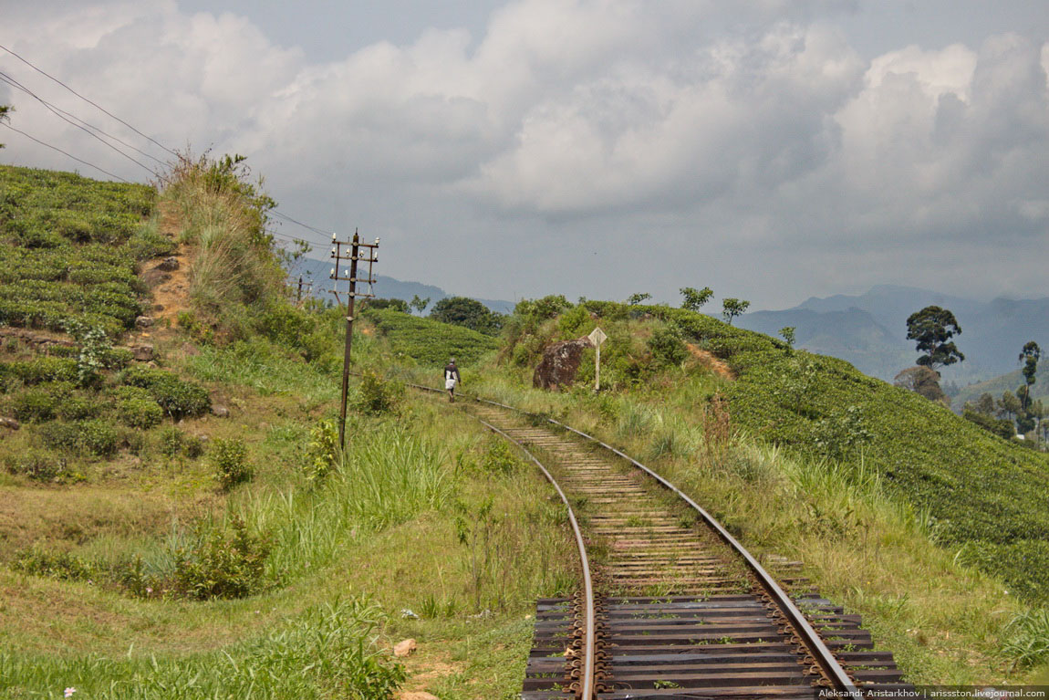 Шри-Ланка_Железная дорога_18