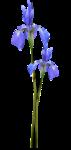 laura_bluemotion_el52.png
