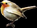 ldavi-feathersandmittens-littlerobin1.png