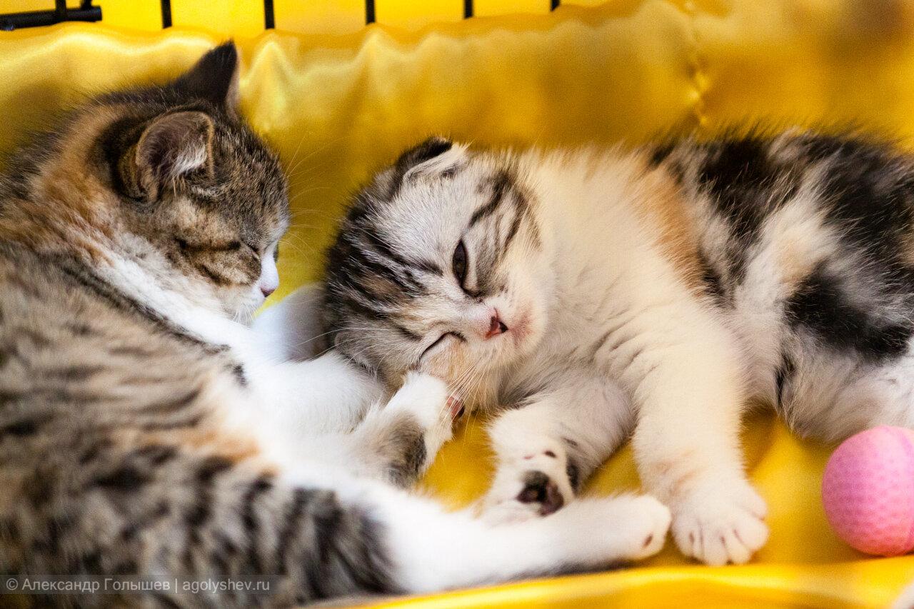 """Международная выставка кошек """"Влюбленные коты"""""""
