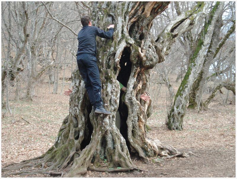 Дерево с руками. А также дерево которое избавляет от сомнений