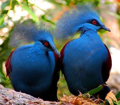 обязательно построю на даче голубятню большую.  И очень хочу узбекского чубатого голубя.  Прям, наверное, пойду на...