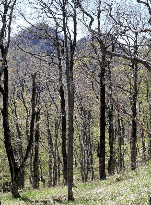 Апрель 2010, Кавказ, Туапсинский район