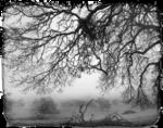 Marif_2007_10Octobre_misted_paysage081.png