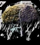 arbre de pluie.png