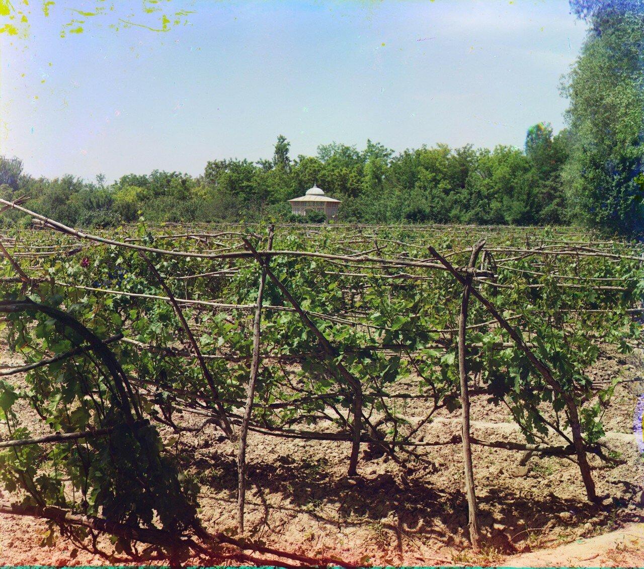 Окрестности Мерва. Байрам-Али. Мургабское имение. Виноградники в Мургабском имении