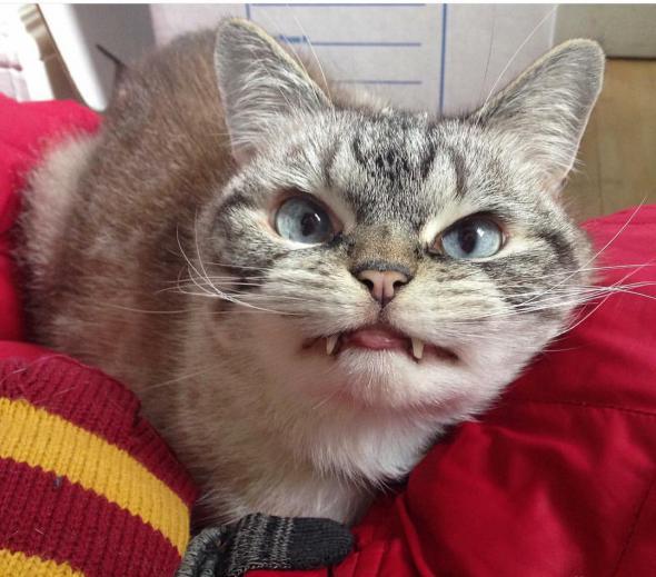 Кот дракула