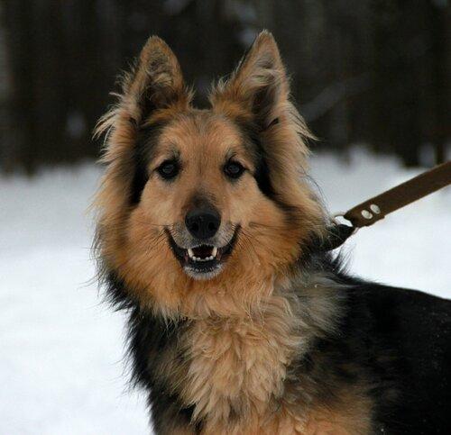 Собачка живет в приюте. 8-985-217-7604