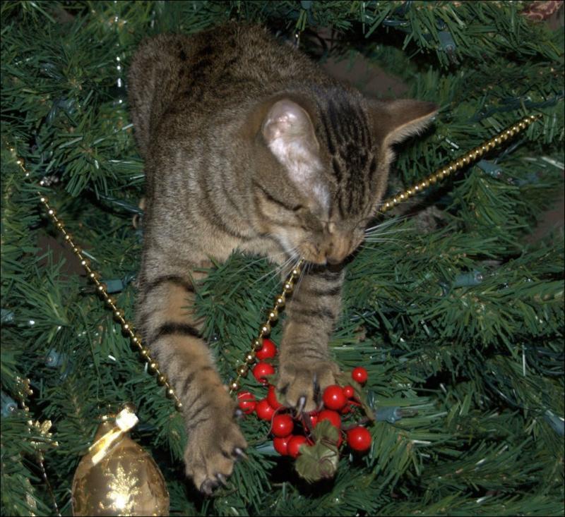 Коты на ёлке - фото 43
