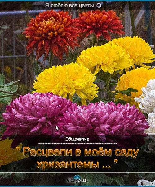 Я люблю все цветы, часть 27