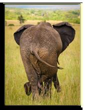 Кения. Масаи Мара. Relaxed elephant waiting for a friends, Masai Mara, Kenya. Фото wrobel27 - Depositphotos