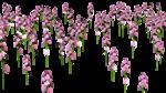 Lug_Grass_Flower (10).png